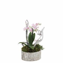 Wood Pink Mini arrangement