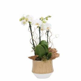 Woody arrangement