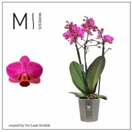 Paars | Multi-flora - 3 tak