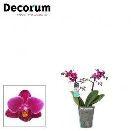 Paars | Mini-flora