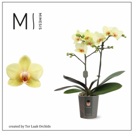 Geel | Mini-flora