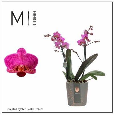 Paars   Multi-flora