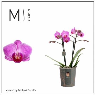 Roze | Mini-flora