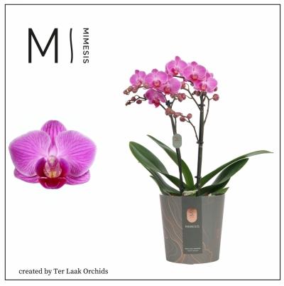 Roze | Multi-flora